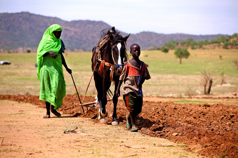 woman-plows-a-field-using-horse-in-goz-beida-chad